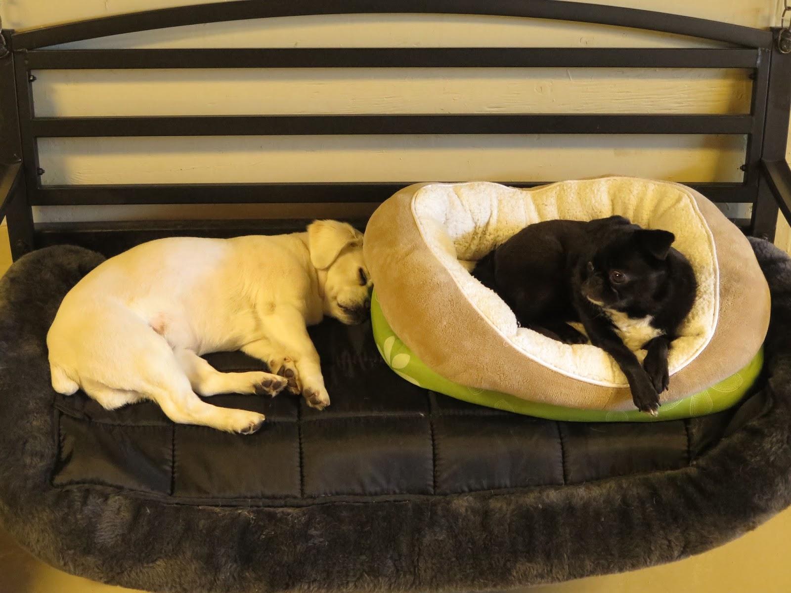 fort fido dog daycare boarding news blog dog photos. Black Bedroom Furniture Sets. Home Design Ideas