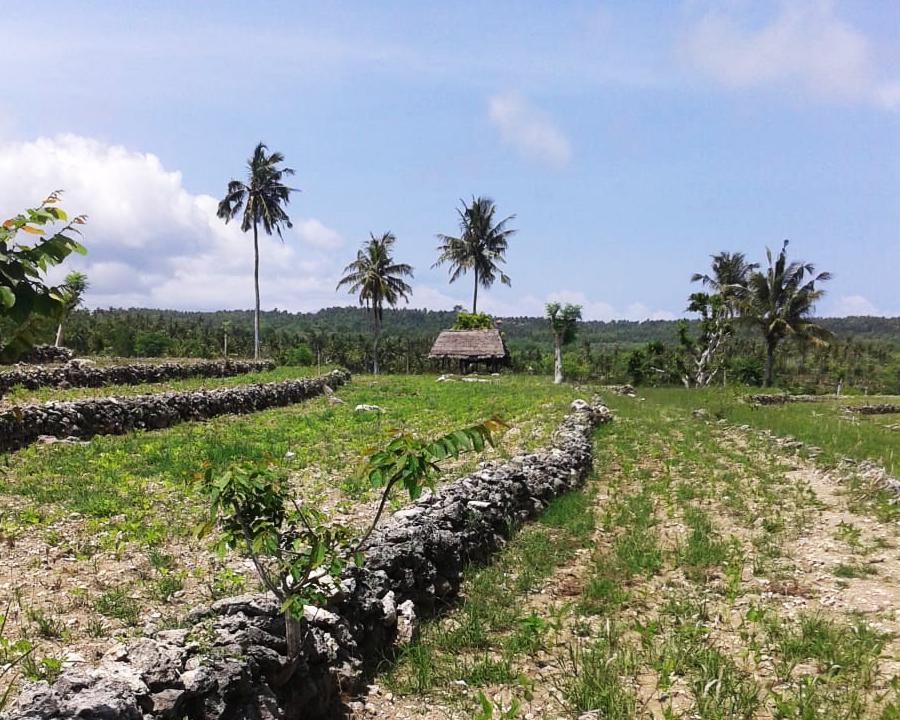tanah murah nusa penida pinggir jalan utama dan fullview