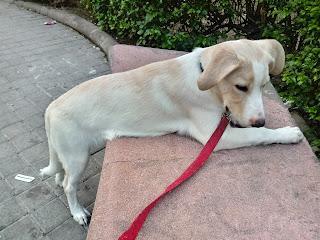 Splendido meticcio un anno fa ho adottato, cane di taglia grande