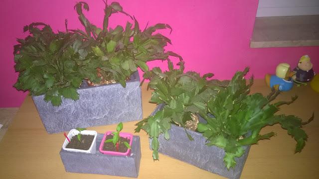 Blumenkästen Ardezza rechteckig in 3 verschiedenen Größen bepflanzt