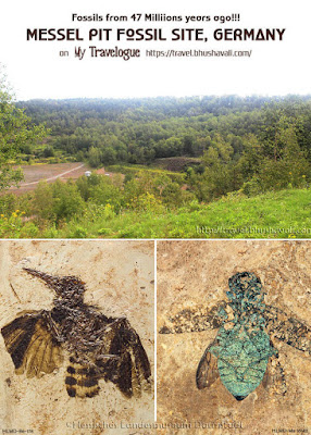 Messel Pit Fossils Jewel Beetle Hoopoe Pinterest