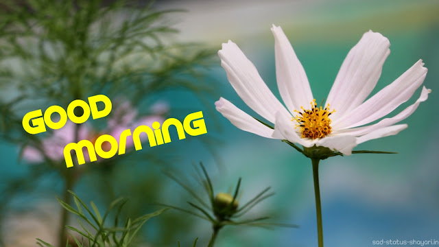 Good morning images 4k hd flower