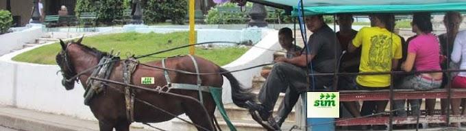 CARROÇAS PARAM: Os burros pagam o pato com a greve do CARROSIM