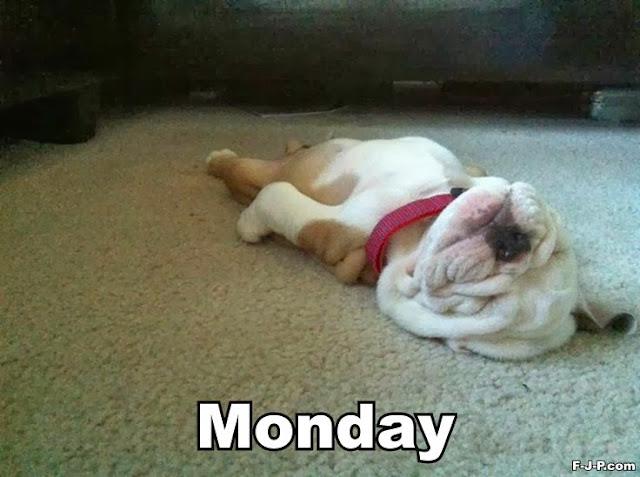 Funny Monday Dog Joke Photo