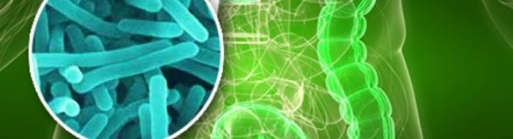 Mikrobiota - co to jest? Jaką pełni rolę w ustroju człowieka? Jaki ma wpływ na nasze zdrowie?