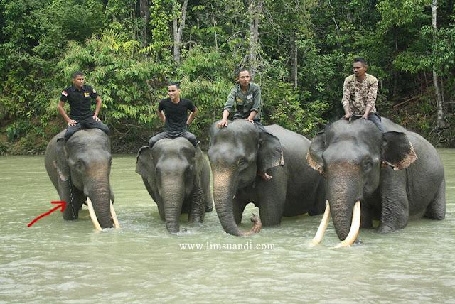 Conservation Response Unit Sampoiniet atau biasa disebut CRU Sampoiniet, berada tepat di Desa Ie Jeureungeh, Kecamatan Sampoiniet, Kabupaten Aceh Jaya, Aceh.    CRU Sampoiniet ini dibangun dengan tujuan untuk mengurangi konflik yang terjadi antara manusia----masyarakat dengan gajah liar yang turun dari hutan mencari makan.