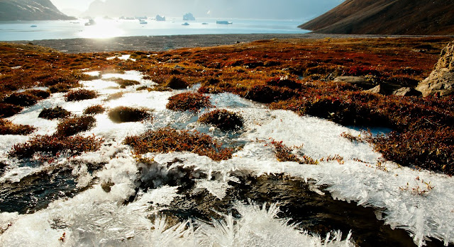 Arctic permafrost releases more CO2 than once believed