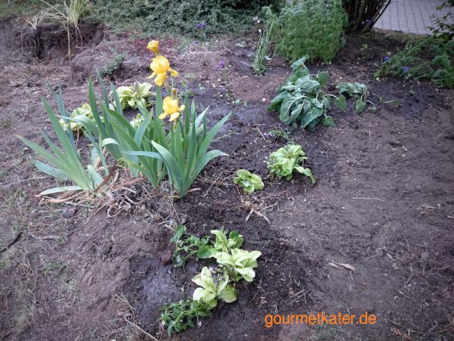 frisch gepflanzte Blumen