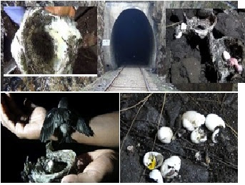 Hatton Singimale Lihini kudu - Singimale Tunnel Gossip