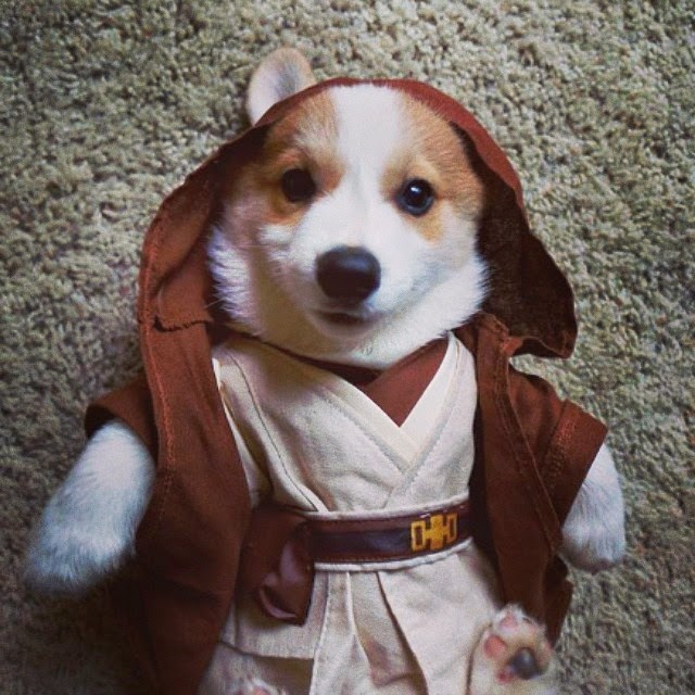 star wars pet costume