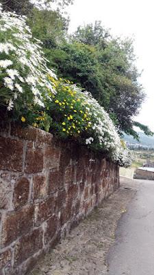 flores sobre um muro de pedra