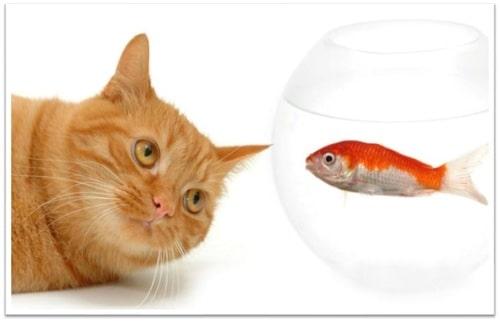 Gatto e pesce rosso