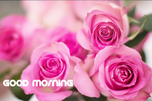 Good morning sms rose image download
