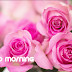 Best free download good morning sms in english rose images | Good morning rose images 2019