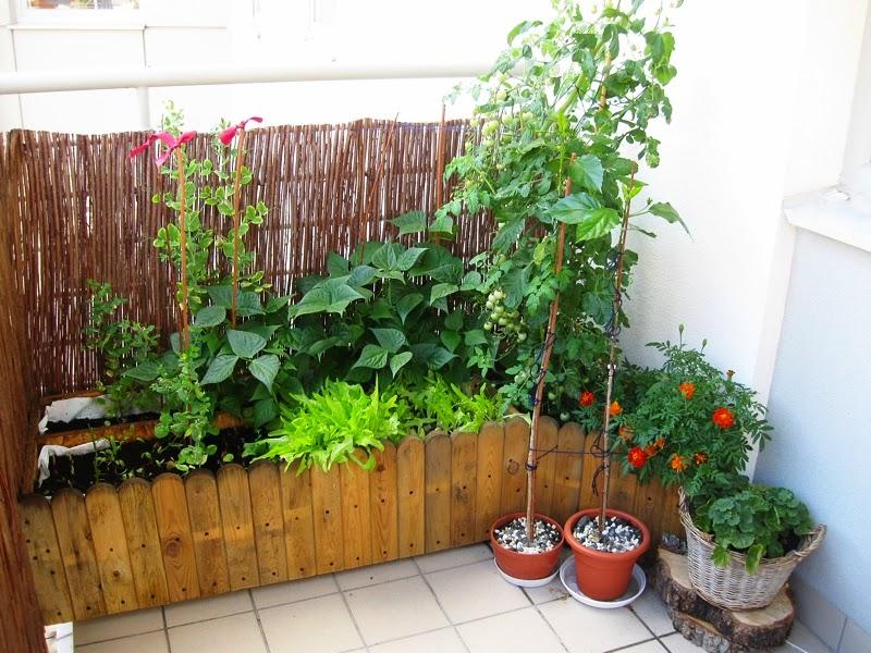 Esensja Zostań Rolnikiem Czyli Warzywa Prosto Z Balkonu