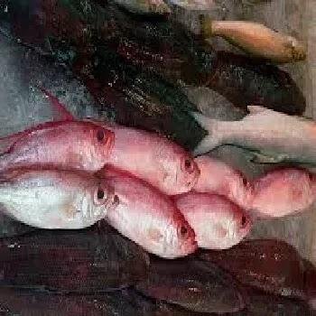 राणी मासा, Pink perch fish name in Marathi