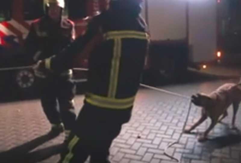 Ces Pompiers n'arrêtent pas de Rire Quand un Chien Décide de les Aider