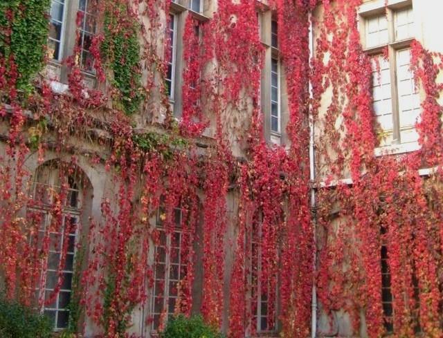 Lenorenevermore: Climbing Vines
