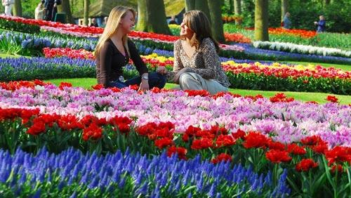 7 Taman Bunga Terindah Bagaikan di Surga