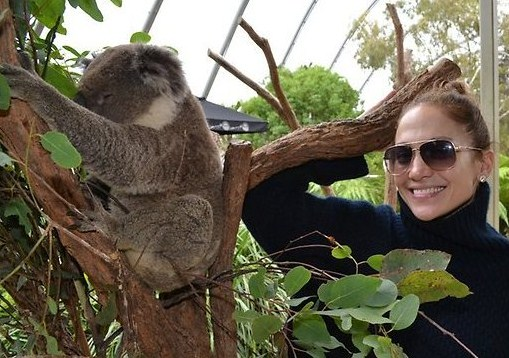Hewan Koala
