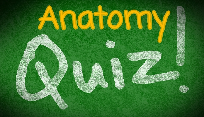 Nursing Quiz on Anatomy and Physiology | Nursing Exam Questions