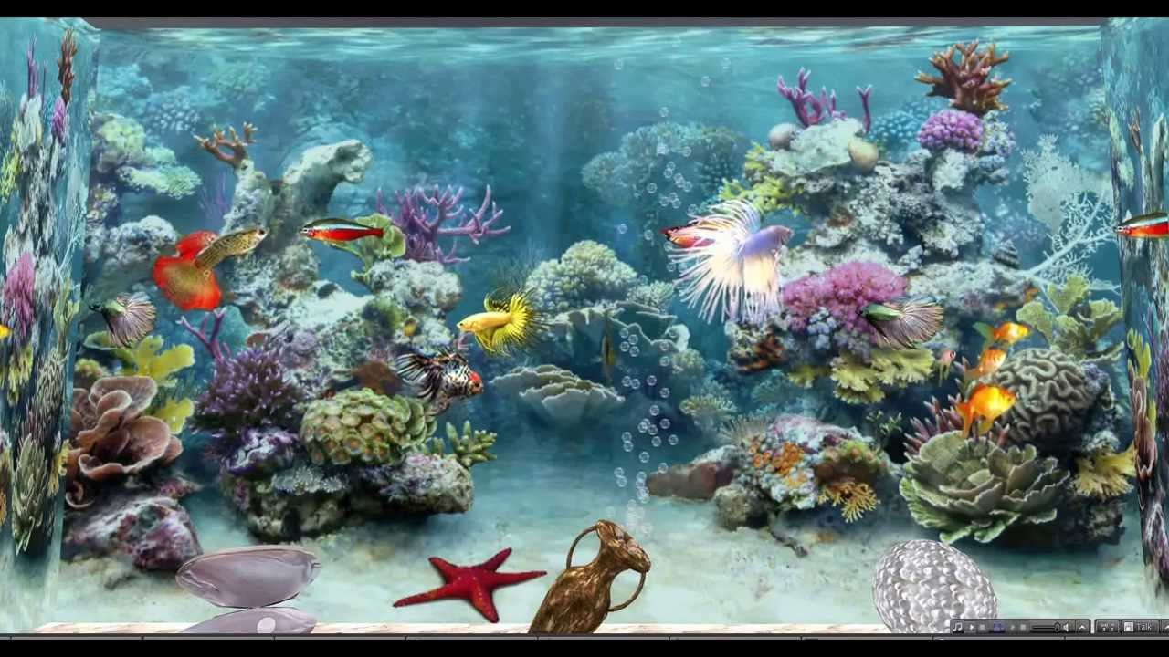 Fond d 39 cran poisson anim fonds d 39 cran hd for Fond ecran gratuit aquarium