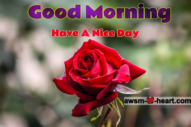 good morning images with rose flowers