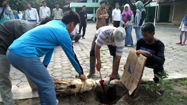 Jakarta Tanpa Ahok, Sekolah Kembali Diperbolehkan Sembelih Qurban