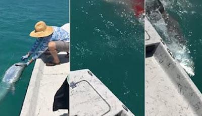 Pemancing Dibuat Kaget Saat Tangkapannya DiSambar Hiu