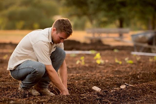 14 Home Gardening Tips