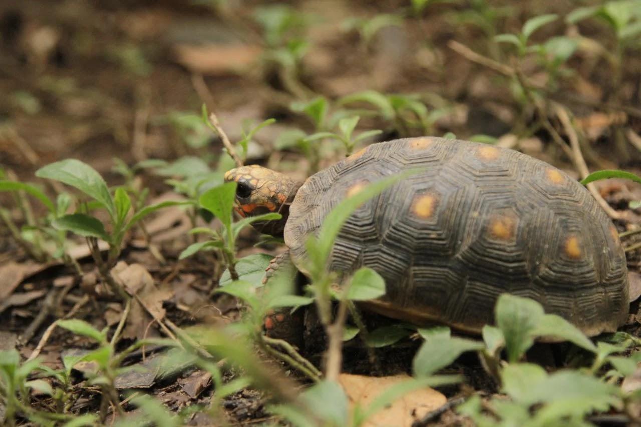 se adelantó una jornada de educación ambiental en el humedal Guatapé, ubicado en el parque conocido como El Cachirre
