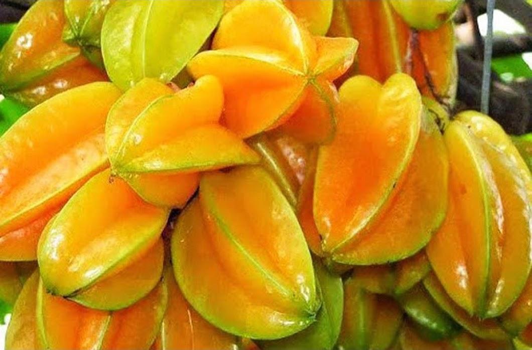 benih buah belimbing unggul 12 seed Kupang
