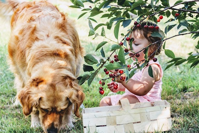 Can Dogs Have berries?