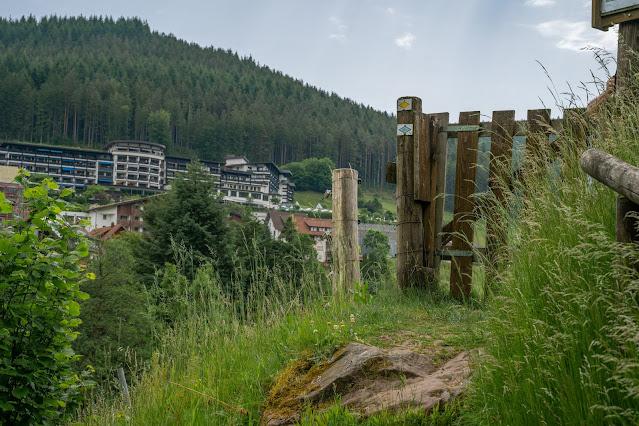 Premiumwanderweg Murgleiter | Etappe 4 von Schönmünzach nach Baiersbronn | Wandern nördlicher Schwarzwald 25