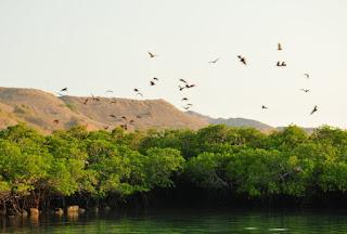 pulau_kalong