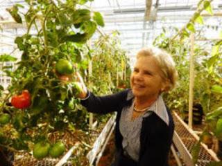 Rasa Dan Kualitas Tomat Tradisional Vs Tomat Modern  Rasa Dan Kualitas Tomat Tradisional Vs Tomat Modern