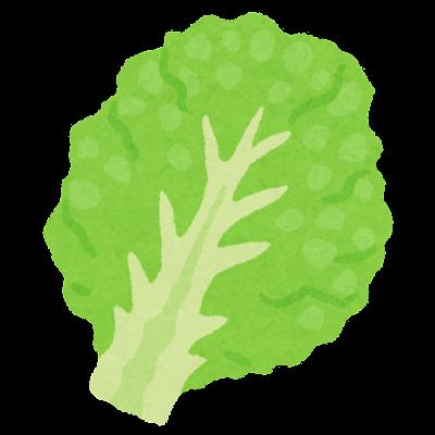レタスの葉のイラスト