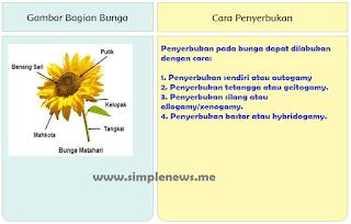 Gambarbagian-bagian bunga dan cara penyerbukannya www.simplenews.me