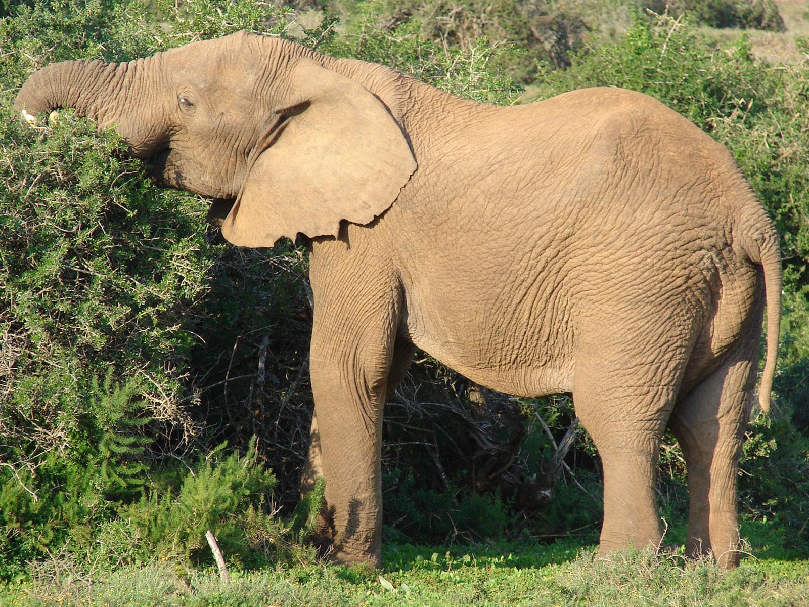 Elephant And The Baby Elephant  Elephant And Th...
