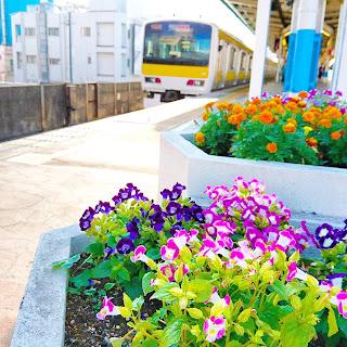 JR本八幡駅のホームの端には花壇があるの知ってますか🏵️🌺🌼