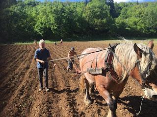 semis de pommes de terre, mai 2020, jpg