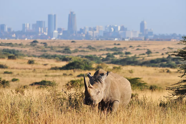 An A-Z Guide to Africa's Capital Cities