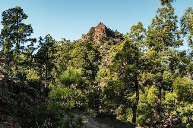 Wandern auf Gran Canaria – Von El Juncal ins Naturschutzgebiet Pajonales 10