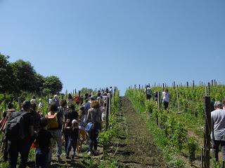 Balade dans les vignes a Monbazillac, malooka