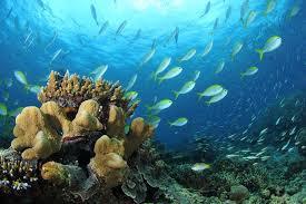 under-water-sea