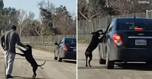 Невозможно смотреть: брошенная собака бежит за машиной, вымаливая ″прощение″…