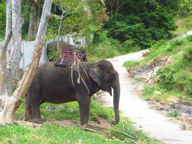 слон для туристов