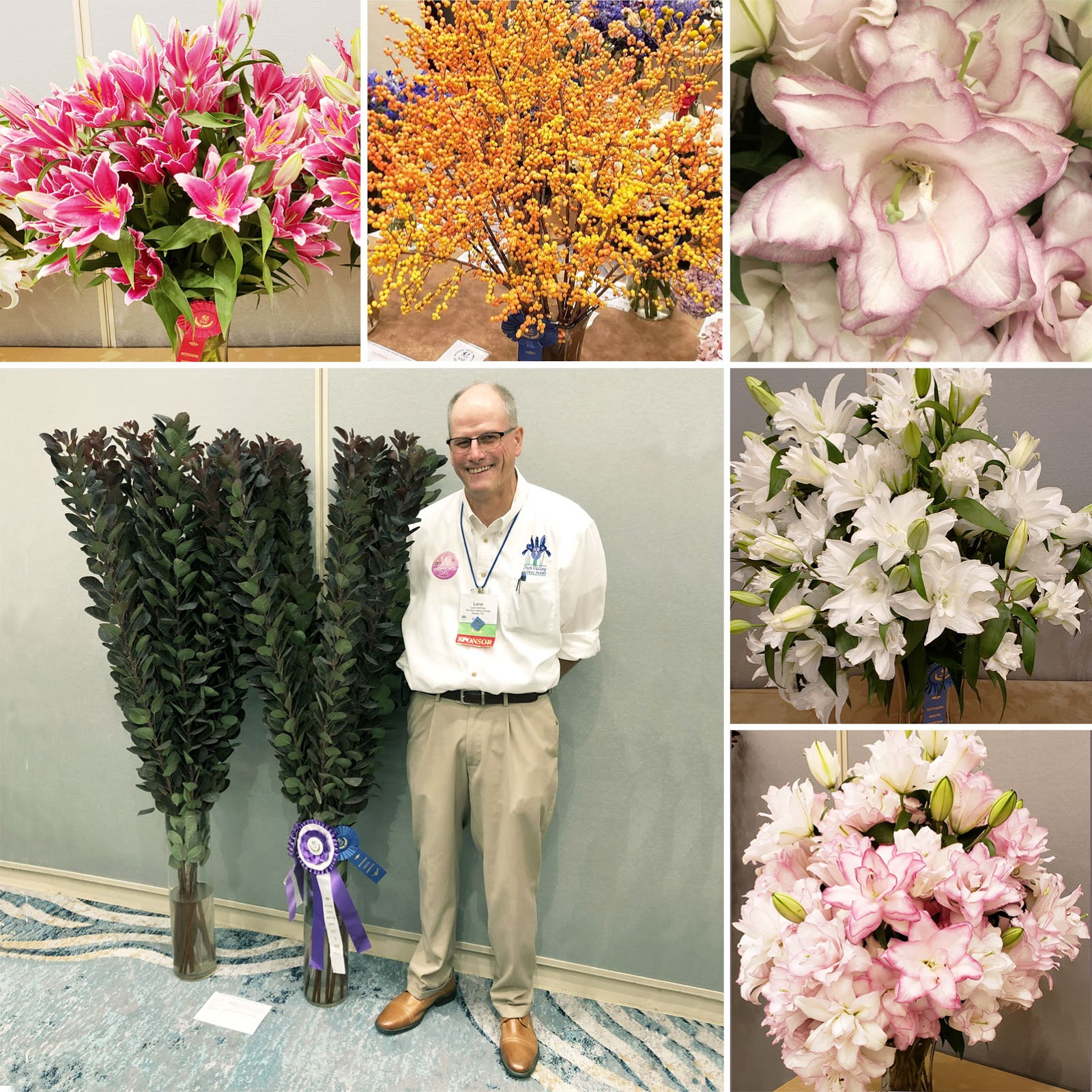 Society of American Florists Sun Valley Outstanding Varieties Competition 2019