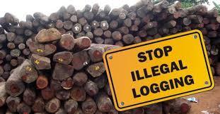 Masih Terjadi Kasus Illegal Logging, Kinerja Polhut KPH 2 Liwa Dipertanyakan