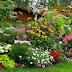 5 looduslikku väetist, mis soodustavad taimede kasvu.